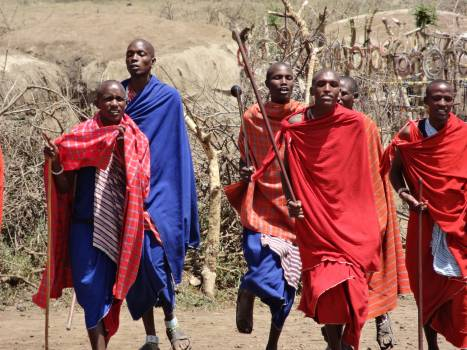 Dances masai show songs Free Photo