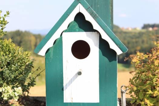 Aviary bird bird feeder bird seed #79072