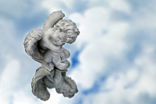 Angel fig mirroring sitting Free Photo