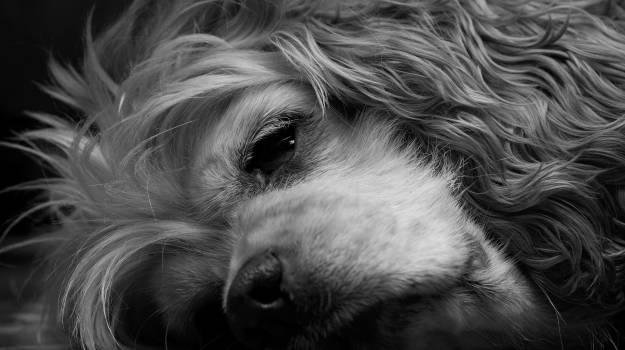 Black and white dog sleeping #79585