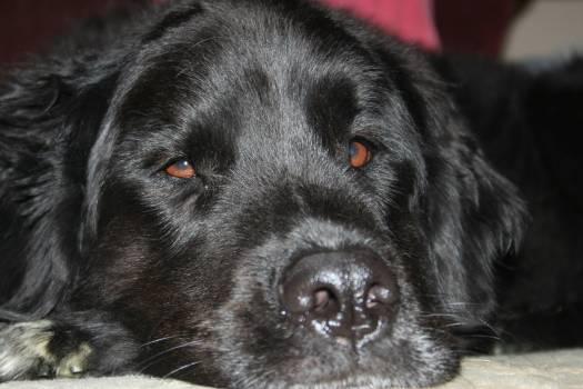 Animal canine dog eyes #79719