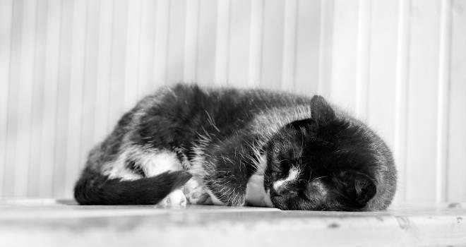 Animal black cat cute #79850
