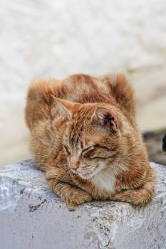 Adidas cat domestic cat doze #79870