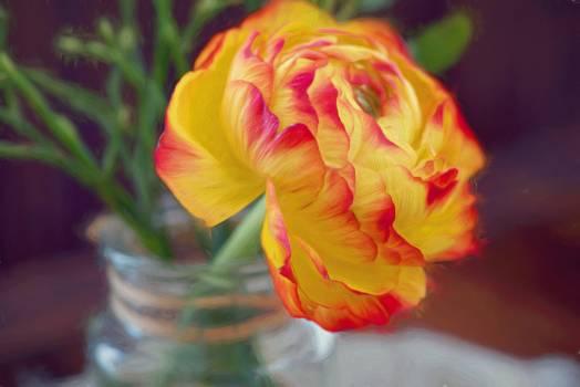Art bloom blossom flower #80106