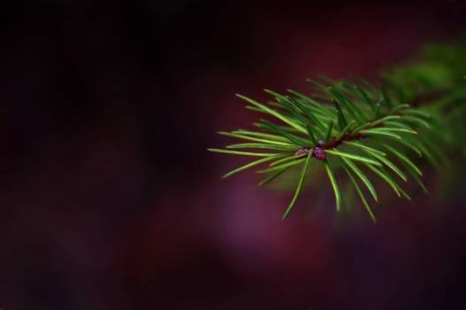 Green image needles painting Free Photo