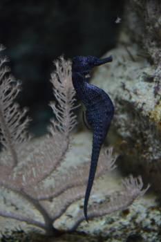 Aquarium aquarium fish blue fish Free Photo