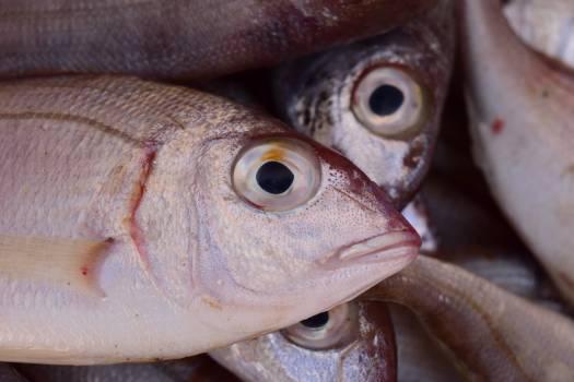 Delicious eat fish fish market Free Photo