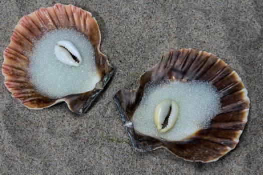 Beach sand glass beads sand shell Free Photo