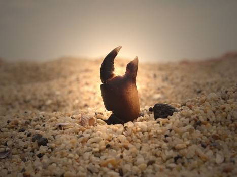 Crab light sand Free Photo
