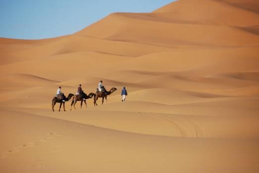 Camel desert dromedary dunes Free Photo