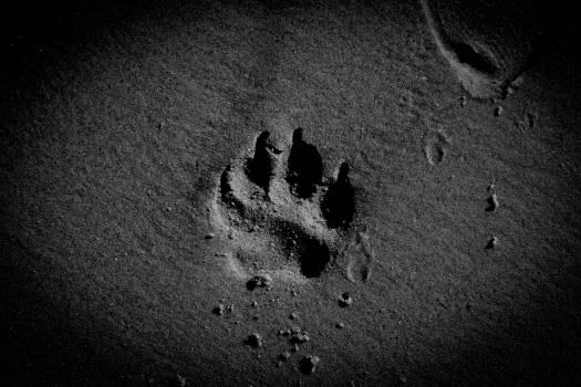 Beach canine dog paw pet #81418