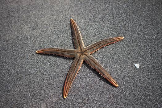 Beach echinoderm marine fauna outdoors Free Photo