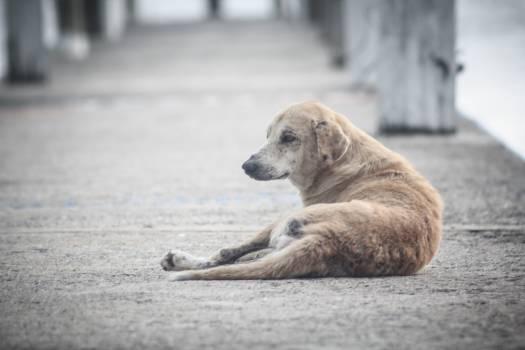 Alone animal canine dog #82015