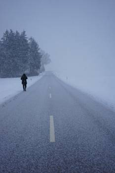 Alone blizzard central reservation cold Free Photo