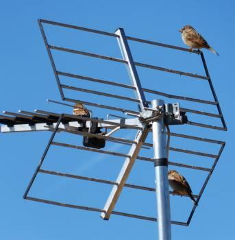 Antenna sky sparrows telecommunications Free Photo