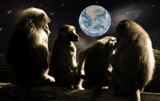 Abendstimmung after work ape baboons #82573