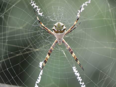 Arachnid arachnophobia bug cobweb Free Photo