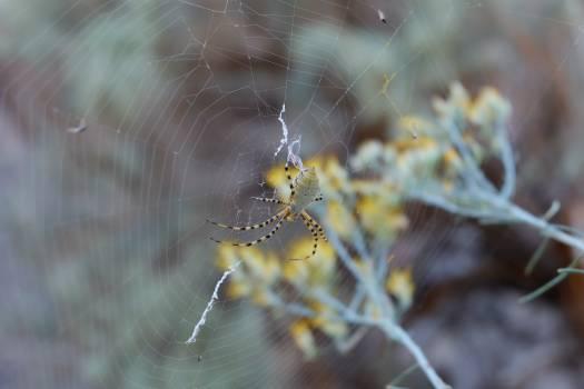 Arachnid blur close up cobweb Free Photo