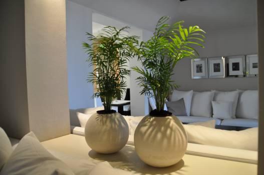 Environment furniture hotel houseplatns Free Photo
