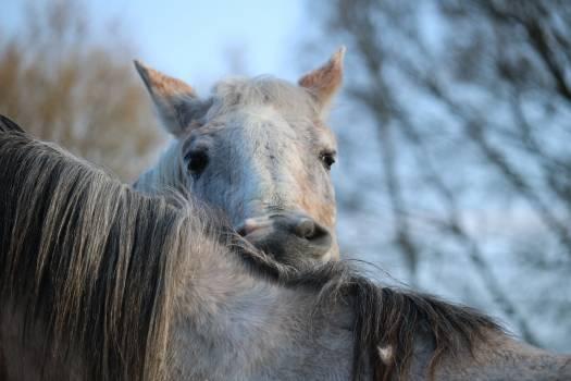 Crawl horse horse head mane Free Photo