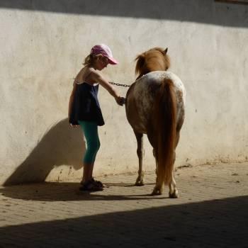 Animal animal care child childhood Free Photo