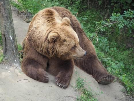 Brown teddy lazy watch #84608