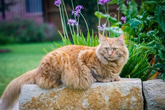 Adorable animal cat cute Free Photo