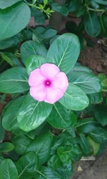 Flower Free Photo