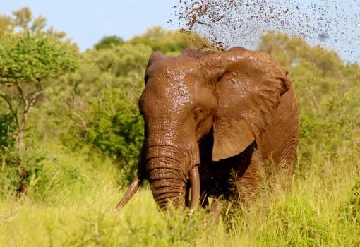 African animal big blue Free Photo