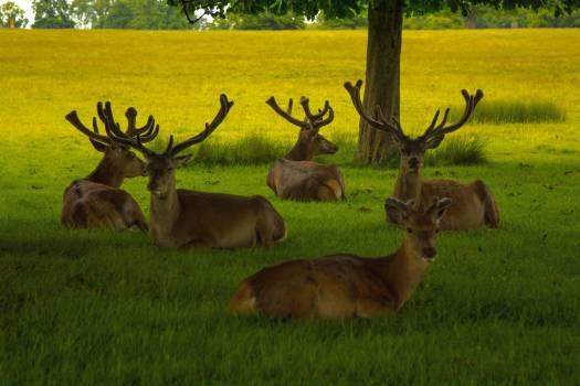 Deer game priroda #85840