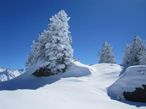 Mountain snow tree winter Free Photo