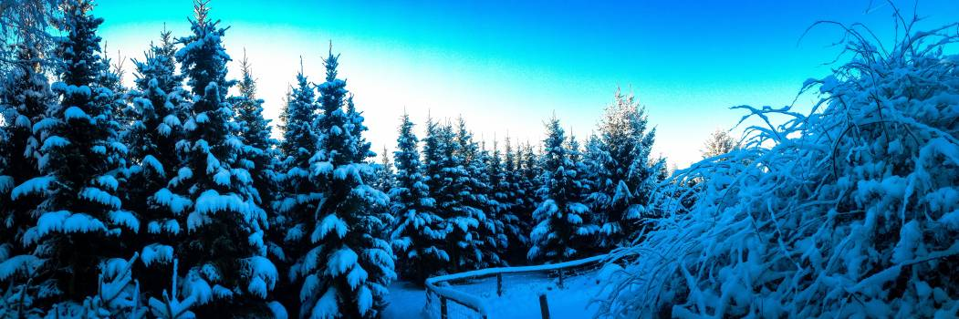 Firs snow magic snowy trees Free Photo