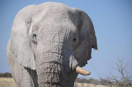 Africa amazing animal animal world Free Photo