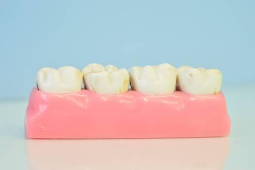 Dental office macromodelo of teeth teeth Free Photo