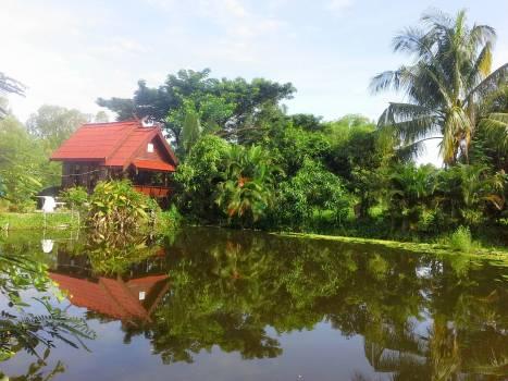 Landscape Water Tree #87368