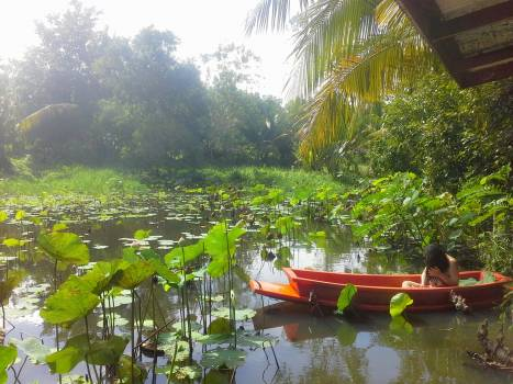 Canoe Boat Small boat #87394