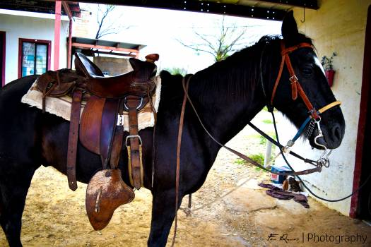 Black horse Free Photo