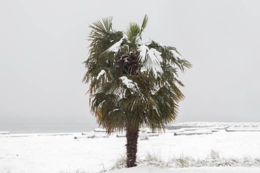 Ocean palm tree winter Free Photo