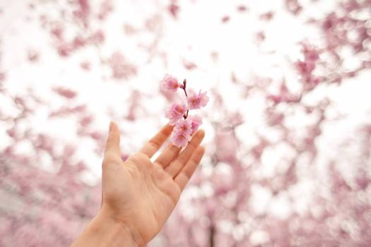 Bloom blossom blur branch Free Photo