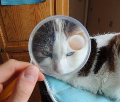 Cat Feline Kitten Free Photo