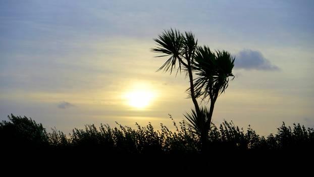 Sky sun tree Free Photo