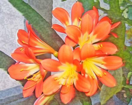 Flower orange #88119