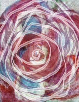 Brush close up red rose rose #88342