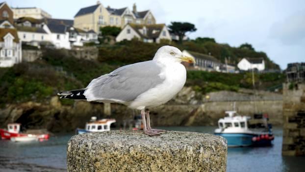 Beach bird blue coast Free Photo