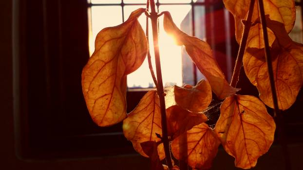 Autumn leaves dries leaves sunlight Free Photo