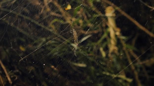 Cobweb nature nature photography photography Free Photo