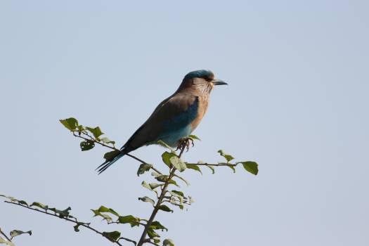 Bird Finch Jay Free Photo
