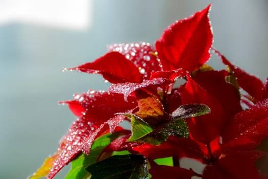 Christmas flower flower green nature #89350