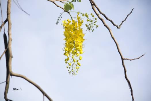 Branchlet Leaf Plant #89457