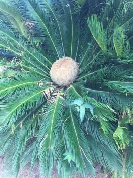 Barcelona green palm tree Free Photo